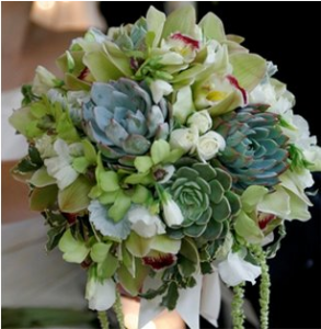 Succulent Bouquets Springfield MO